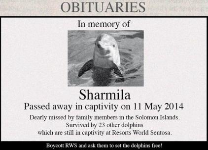 dolphin SHARMILA